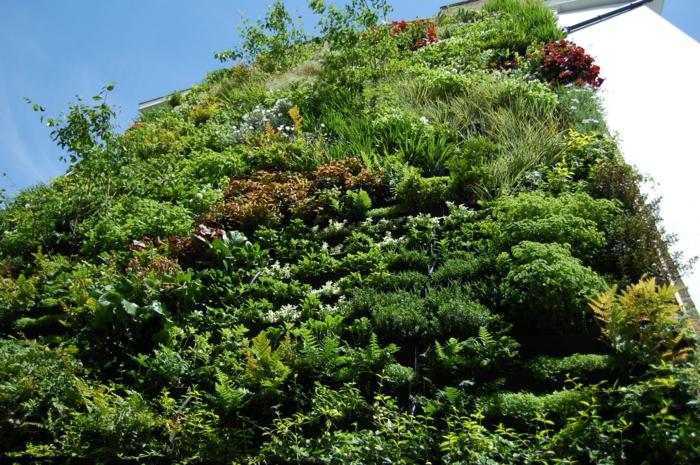 édifice au mur végétal vert, rouge et jaune, mur vegetal exterieur, plan urbain écologique, murs blancs, journée de soleil qui met en valeur le mur vert