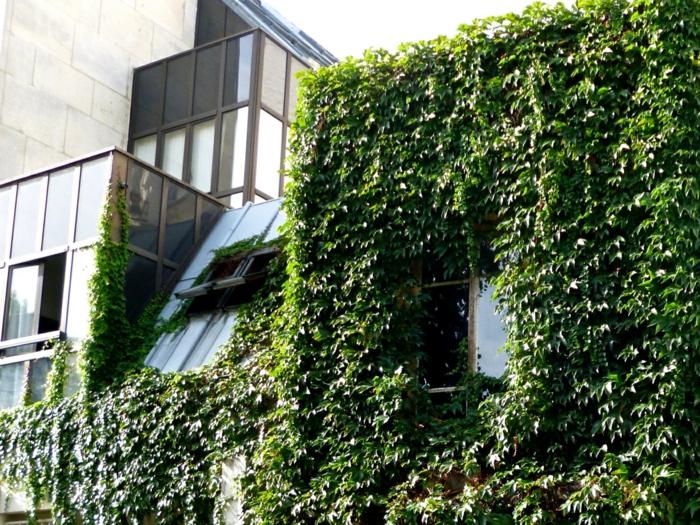 mur vegetal exterieur, édifice administratif avec une partie du bâtiment recouverte de plantes rampantes vertes, fenêtre que l'on entrevoie parmi a verdeur