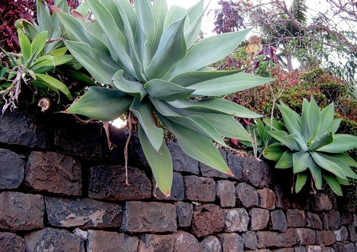 mur en briques noires et rouges, cloison végétale, mur végétalisé, culture verticale, plantes grasses exotiques, succulents, entretenir un mur de cloison avec des espèces végétales succulentes