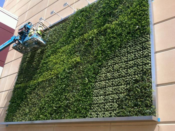 mur vegetal exterieur, gros panneau en aluminium en forme carrée, végétation verte, équipe qui entretient ce mur végétalisé, spots blancs bras long pour illuminer ce panneau de verdure