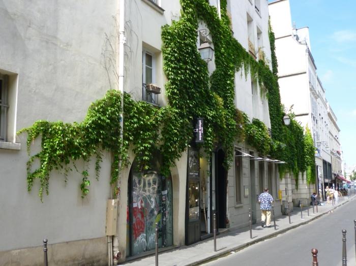 culture verticale, jardin vertical, plantes rampantes vertes sur un vieil édifice a la façade toute blanche, fenêtres entourées de vert, mur vegetal exterieur