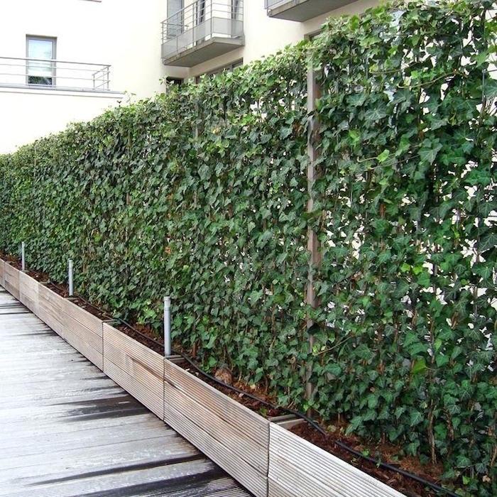 idée de mur végétal dans jardinières en bois pour séparation et brise vue entre les appartements