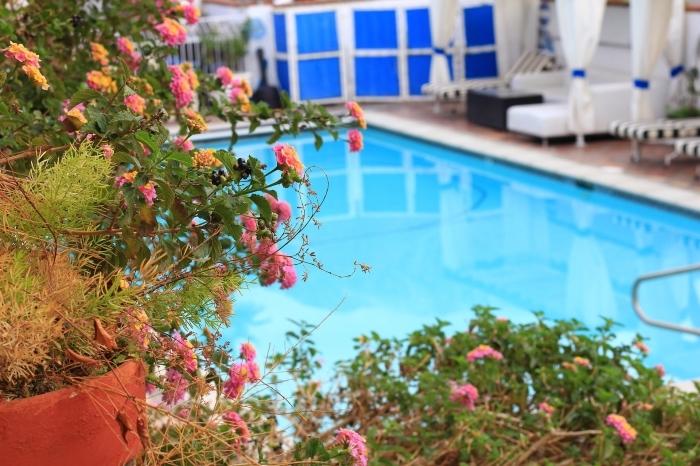 déco d'espace extérieur avec fleurs et piscine rectangulaire, choisir la meilleure assurance habitation avec garantie piscine