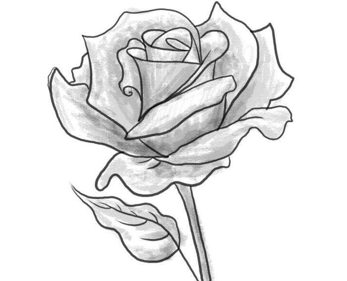 joli dessin de fleur réaliste facile à reproduire, modèle de rose ouverte au crayon à design réaliste avec ombre et lumière