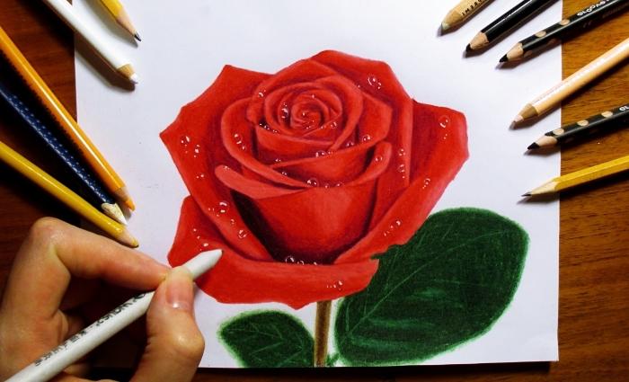 technique dessin de fleur facile à faire, modèle de rose ouverte en couleur avec pétales rouges et feuilles vertes aux crayons