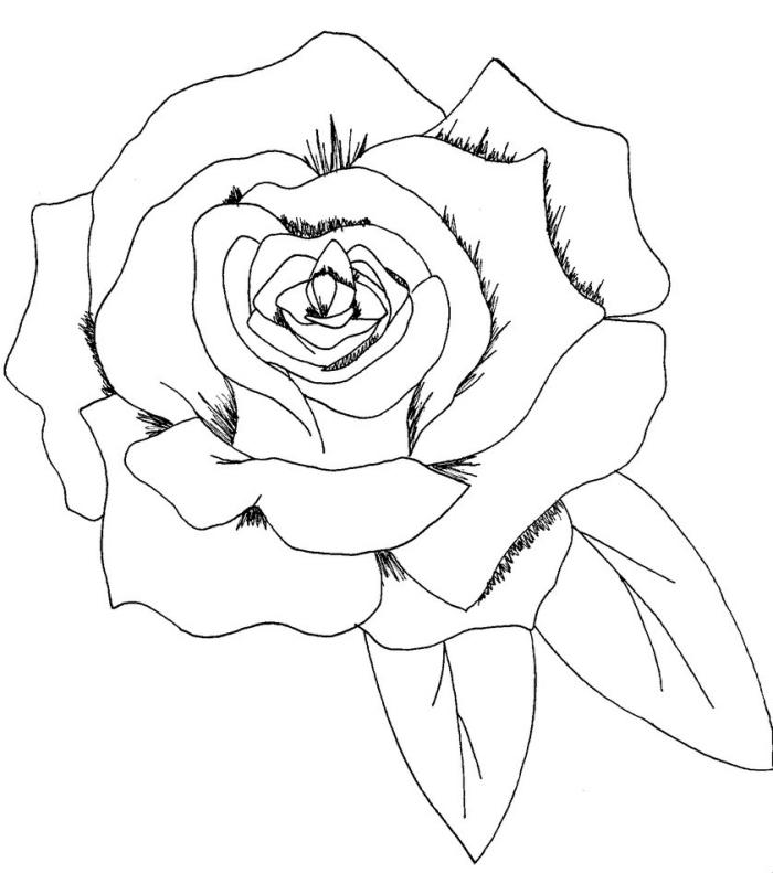 comment dessiner une fleur facile au crayon, modèle de dessin de rose ouverte avec feuilles en blanc et noir