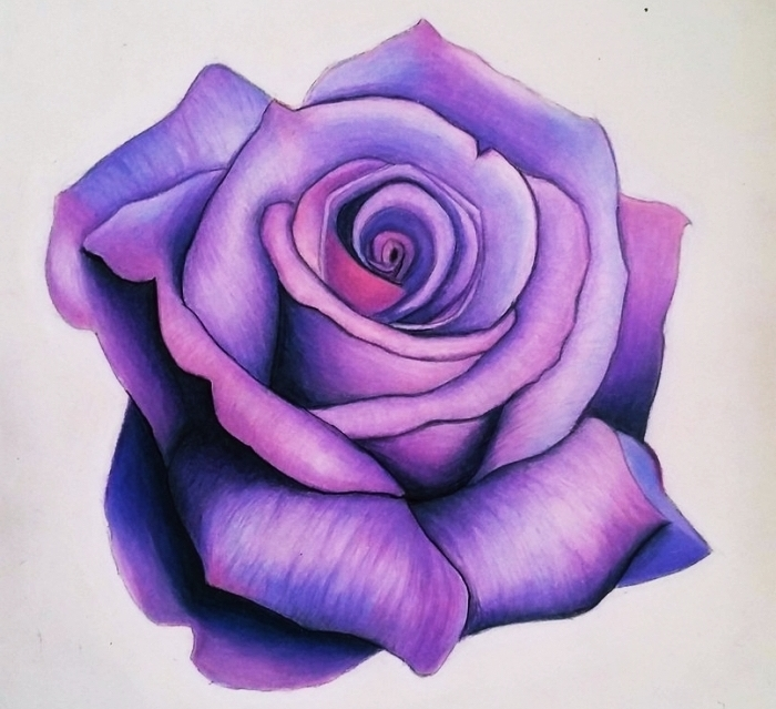 joli dessin d'une rose violette réel avec technique ombre et lumière, idée comment dessiner une fleur facile, fleur dessin réaliste