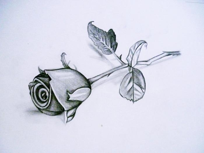 dessin fleur noir et blanc, modèle de rose réaliste réalisé au crayon, technique dessin avec ombre et lumière
