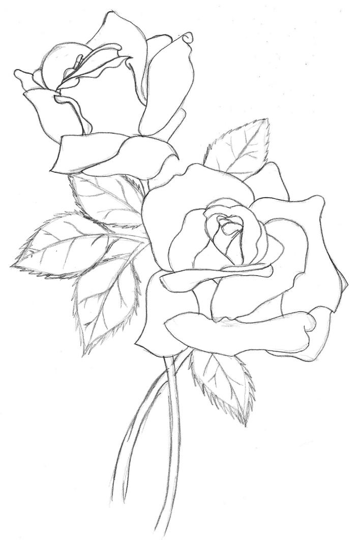 comment apprendre à faire une rose au crayon facile, modèle de croquis de bouquet de roses ouvertes avec feuilles