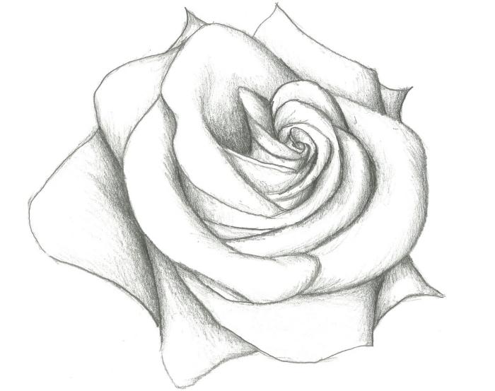 croquis de fleur facile à dessiner, modèle de rose au crayon blanc et noir, exemple de dessin de rose ouverte facile