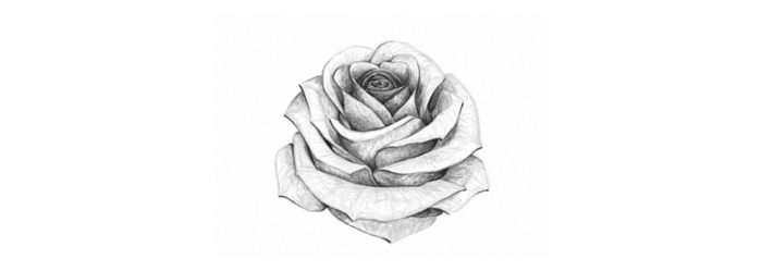 croquis de rose ouverte en blanc et noir, comment dessiner une fleur en perspective avec la technique ombre et lumière