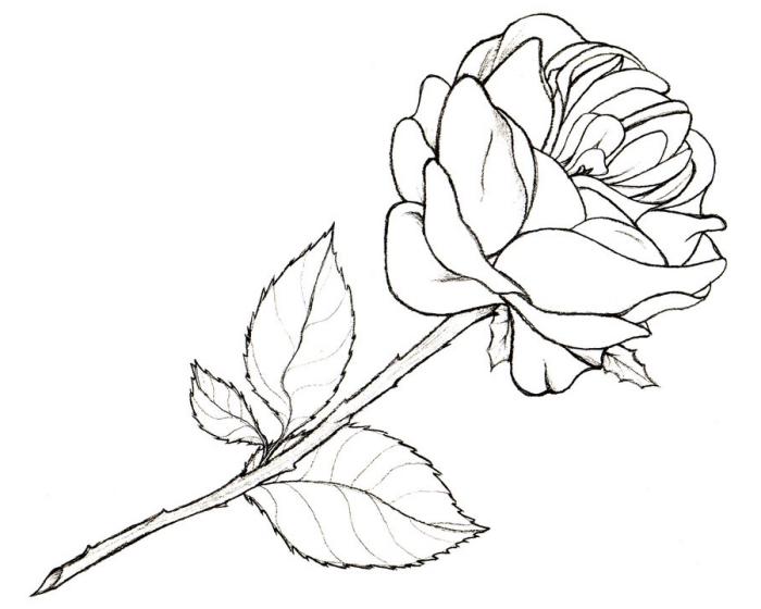 dessin fleur noir et blanc facile à reproduire, exemple comment dessiner une rose ouverte avec feuilles et épines