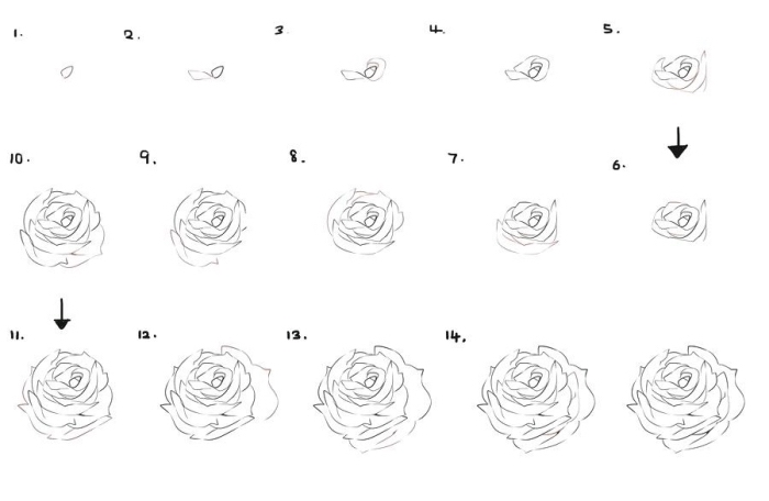 apprendre a dessiner une rose etape par etape