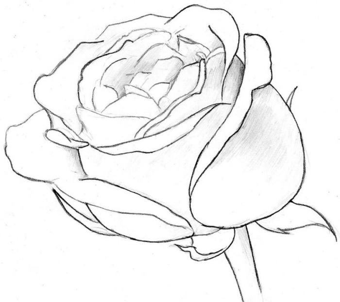modèle de rose ouverte au crayon, comment dessiner une fleur en blanc et noir, éléments de rose pétales et tige à dessiner facilement