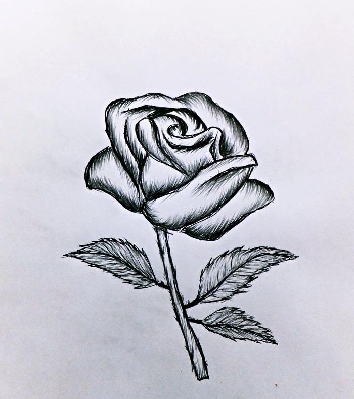modèle de dessin facile à faire, idée comment dessiner une fleur blanc et noir, dessin de rose ouverte avec feuilles