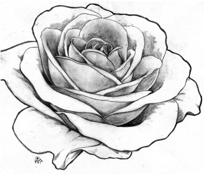exemple de fleur a dessiner, modèle de dessin de rose ouverte blanc et noir réaliste avec la technique ombre lumière