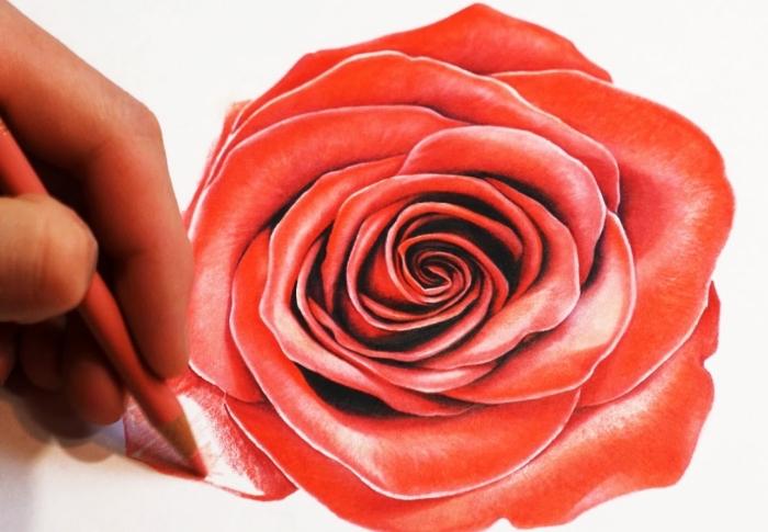 apprendre à dessiner une fleur en couleurs, technique dessin au crayon, modèle de rose ouverte de couleur rouge