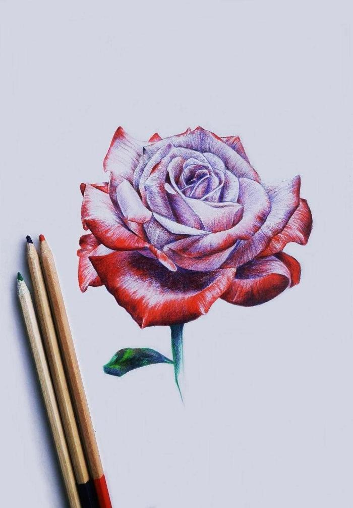 fleur a dessiner au crayon, modèle de rose violet aux pétales rouges et feuilles vertes, idée joli dessin de rose