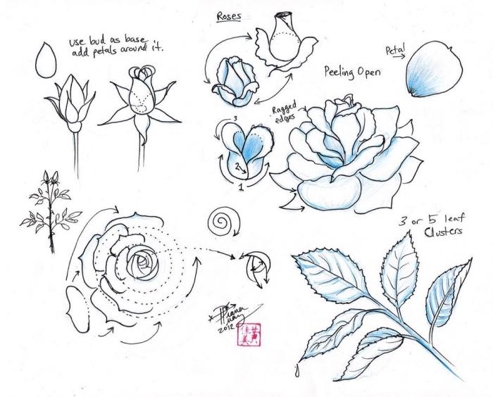 techniques pour apprendre à dessiner facilement une fleur, modèle dessin de rose fermée ou ouverte au crayon blanc et noir