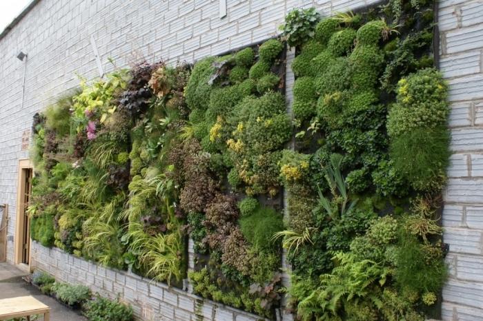 comment masquer et embellir un mur disgracieux, un tableau vegetal luxuriant à effet décoratif