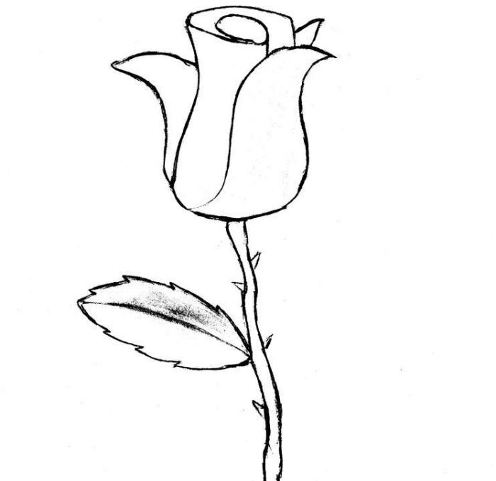 modèle de rose semi-ouverte en blanc et noir, dessin de fleur facile à reproduire, exemple dessin de rose avec feuilles et épines