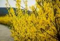 Les arbustes pour haies fleuries les plus aimés – lesquels choisir pour son jardin