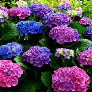 Les arbustes pour haies fleuries les plus aimés - lesquels choisir pour son jardin