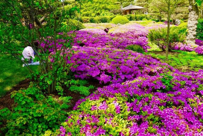 jardin style japonais fleuri lilas, tapis végétal dans le jardin, jardin paysager