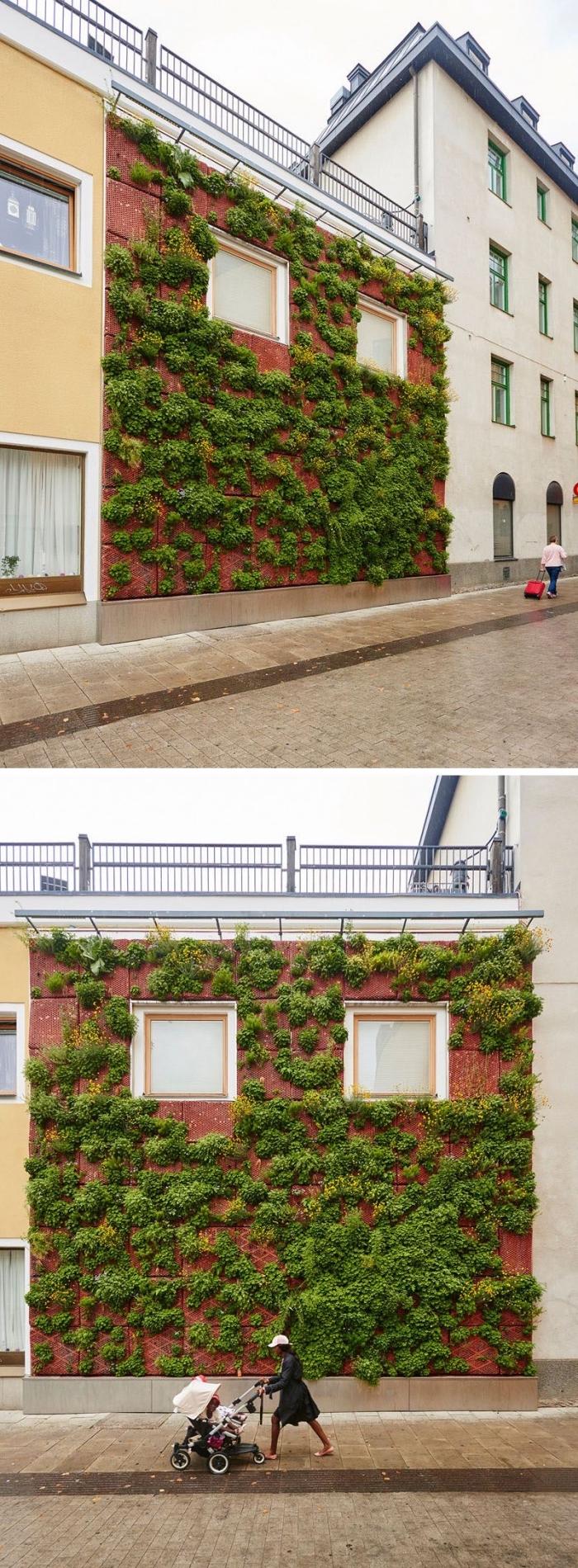 une façade végétalisée en plein milieu urbain qui apporte une touche de fraîcheur et contribue à l'assainissement de l'air , idée pour un mur végétalisé sur la façade d'une maison ou d'un bâtiment