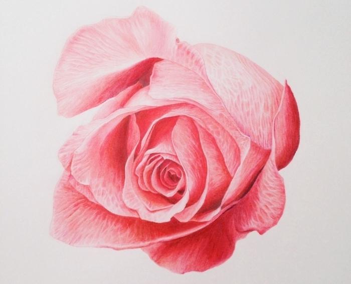 exemple de dessin fleur couleur rose, joli modèle de rose ouverte aux pétales roses, idée comment faire une rose au crayon