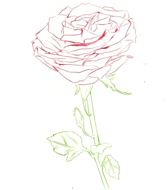 dessin facile a reproduire, modèle de rose ouverte aux contours pétales rouges et feuilles vertes, dessin minimaliste en couleur