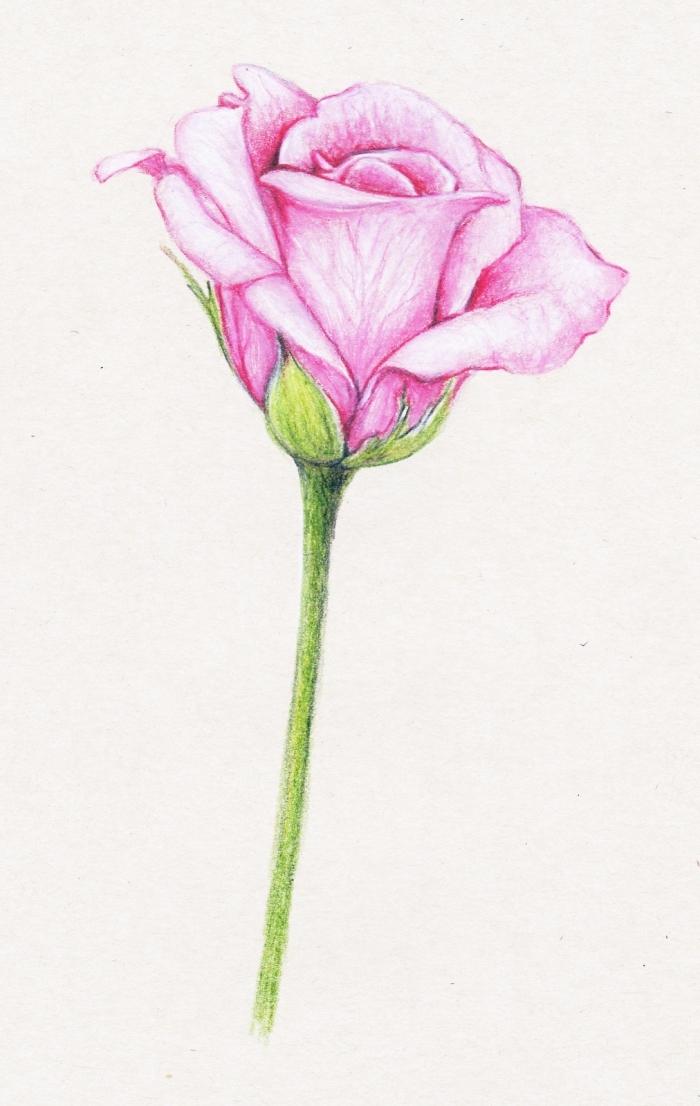 exemple dessin de rose en couleurs, idée comment dessiner une fleur en crayon, dessin de rose aux pétales roses