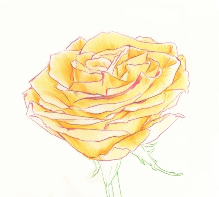 joli dessin de rose en couleur, modèle de dessin de fleur facile avec pétales rose jaunes et tige et feuilles au contour crayon vert