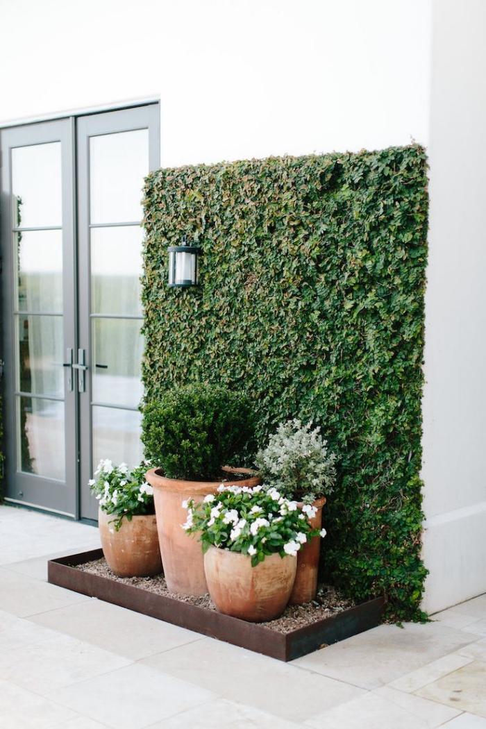 coin de verdure dans le jardin aménagé à côté de la porte avec un mur végétal extérieur de lierre et des pots en terre cuite