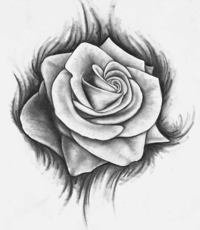 dessin de fleur blanc et noir au crayon, modèle de dessin de rose ouverte avec la technique ombre et lumière