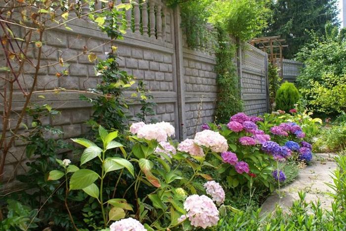 ou planter les arbustes fleurissants, haie vivante avec fleurs multicolores près d'une cloture