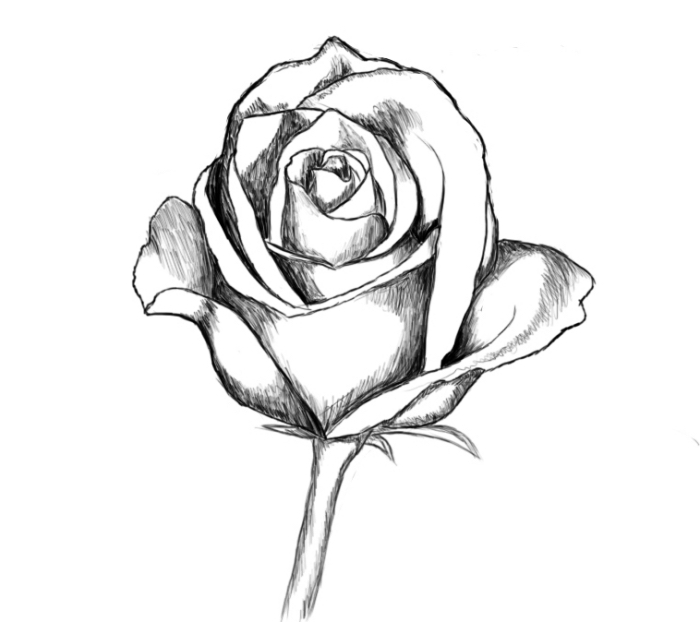modele dessin facile à réaliser avec la technique ombre et lumière, comment faire un dessin de rose en blanc et noir