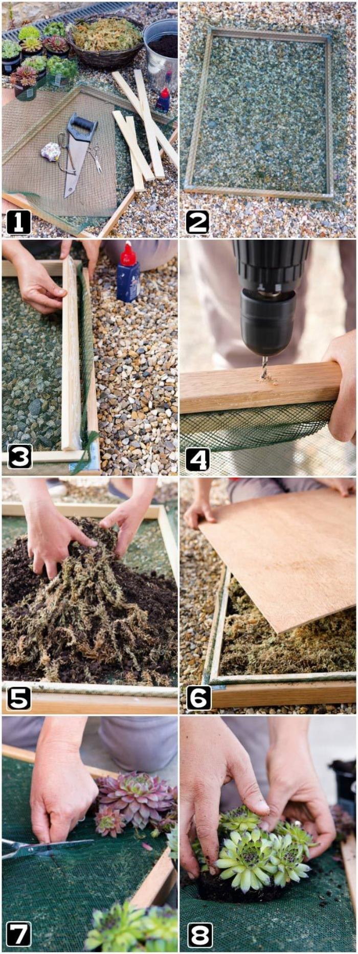 tuto facile pour réaliser un tableau vegetal avec plantes grasse, à l'aide d'un cadre chiné et grillage à poule