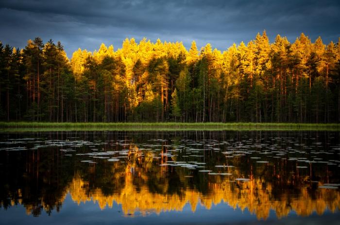 foret mixte très jolie, couronne des arbres jaunes, sapins, cours d'eau, paysage d'automne