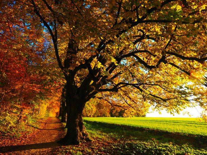 allée dans le champ vert, arbres pittoresques au feuillage d'automne, fond d'écran paysage