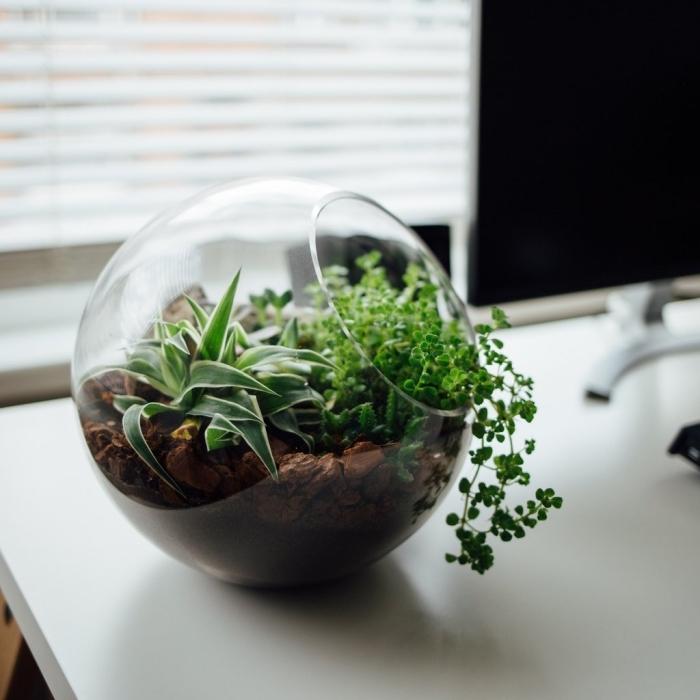 exemple de plante pour terrarium ouvert rempli de terreau et galets, idée comment décorer son bureau avec végétation