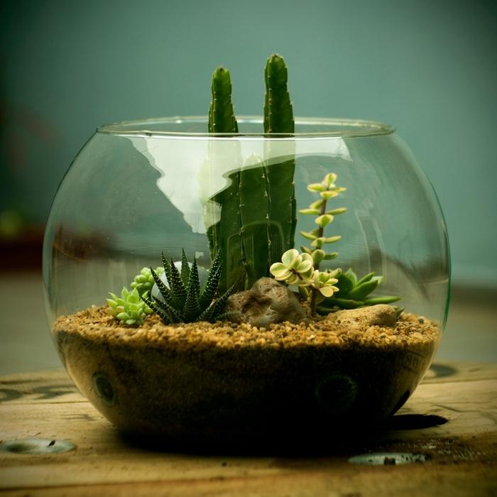 exemple comment recycler un aquarium, remplir un aquarium rond avec végétation, idées plantes vertes dans bocal ouvert