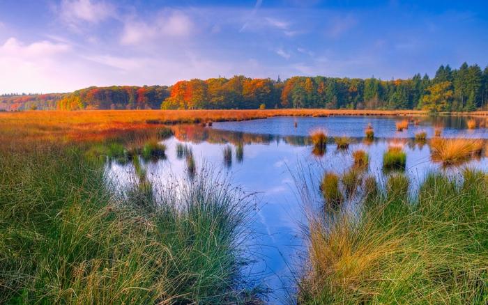 images fond d'écran, cours d'eau, herbes vertes et couleur de l'herbe jaune au lointain