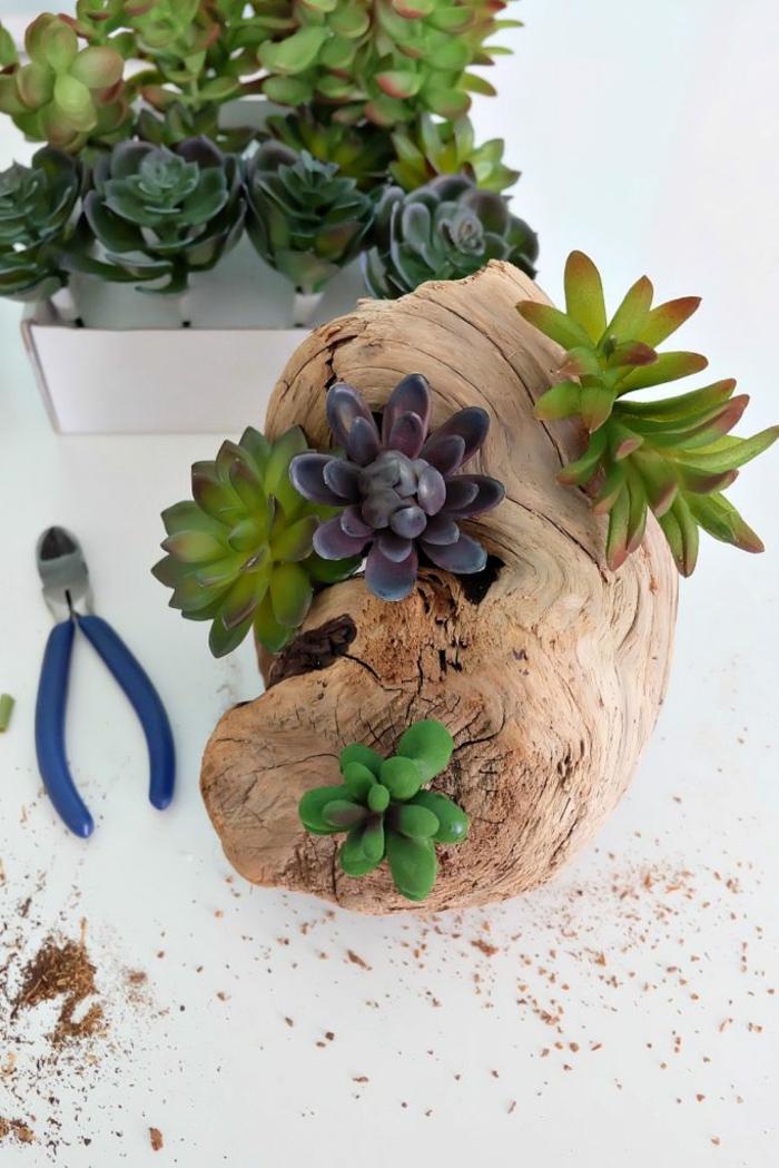 création en bois flotté, morceau de bois flotté et plantes succulentes fausses