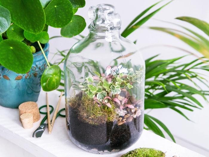 idée terrarium facile avec petite plantes humides, remplir un bocal terrarium avec terreau et mousse pour plantes vertes