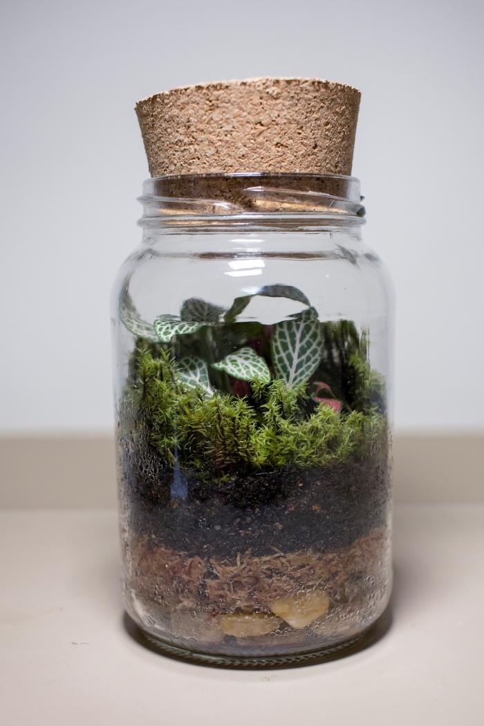modèle de mini jardin DIY fabriqué avec un récipient en verre et petites plantes vertes, exemple comment remplir un terrarium