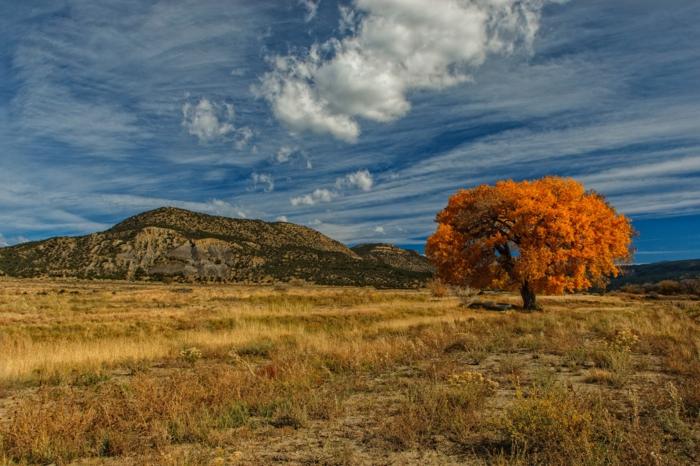 paysage d'automne, ciel bleu, colline rocheuse, arbre solitaire dans la prairie