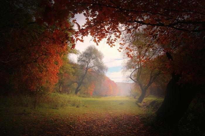fond d'écran automne, arbre aux feuillage rougeoyant, clairière, ciel et nuages
