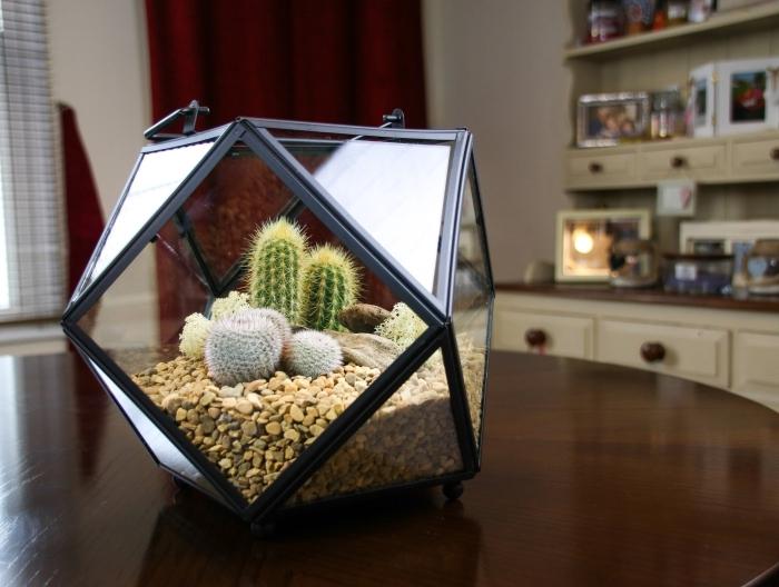 idée pour créer un jardin de cactus semi-ouvert dans un contenant original en forme géométrique rempli de cailloux et galets