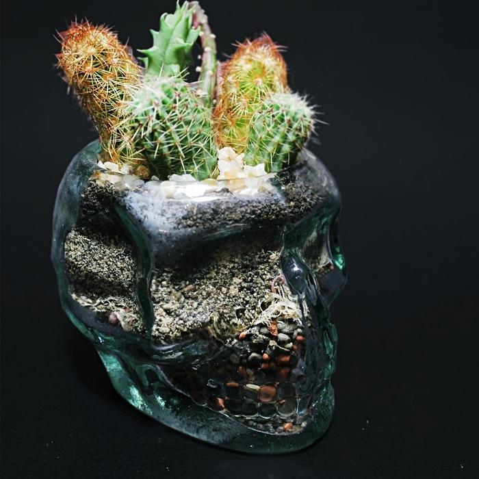 objet de déco DIY avec un contenant en verre à design crâne rempli de galets et de terreau avec plantes succulentes ou cactus
